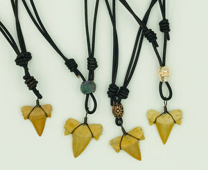 Shark Tooth Necklace