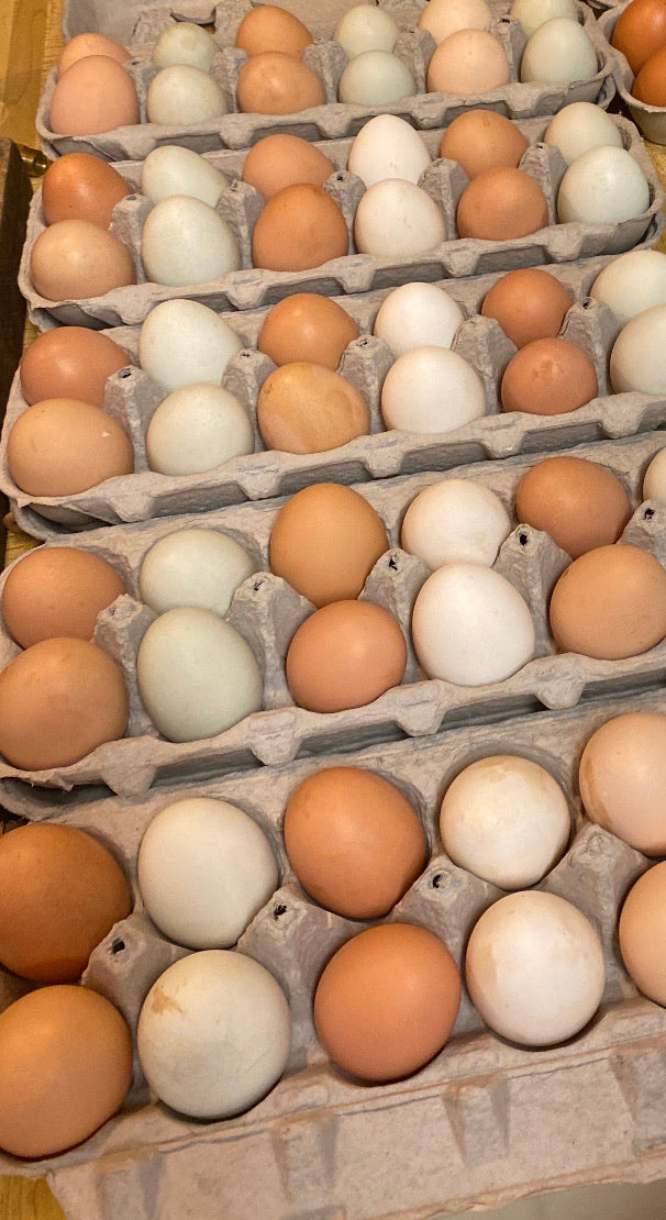 Fischer Family Homestead Organic Eggs