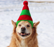 Load image into Gallery viewer, a brown and white dog wearing a green hat