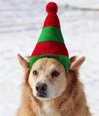 a brown and white dog wearing a green hat