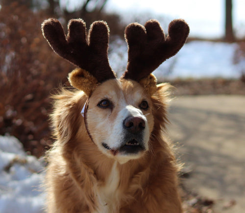 kp-pet-supply KP Pet Supply Adjustable Pet Antler Hat Holiday Costume Headband for Medium-Large Dogs KP Pet Supply Dog