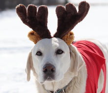 Load image into Gallery viewer, kp-pet-supply KP Pet Supply Adjustable Pet Antler Hat Holiday Costume Headband for Medium-Large Dogs KP Pet Supply Dog
