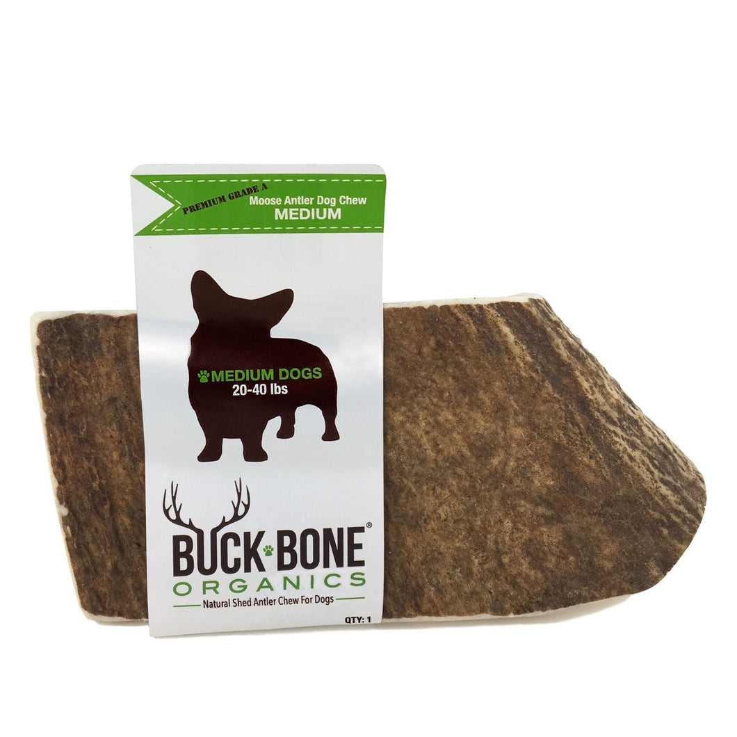 Buck Bone Moose Antler Dog Chew - Medium or Large - KP Pet Supply