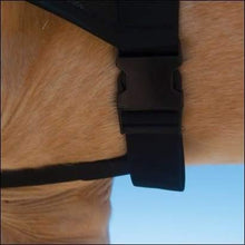 Load image into Gallery viewer, kp-pet-supply BeneFab Rejuvenate Smarthood - Medium, XL Benefab Horse
