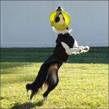 Load image into Gallery viewer, a dog jumping in the air with a frisbee in its mouth