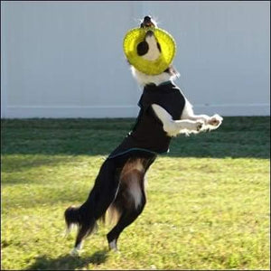 a dog jumping in the air with a frisbee in its mouth