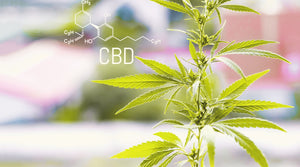 The Endocannabinoid System And CBD: What Do You Need To Know?