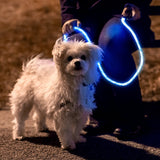 Nitey Leash - LED Lighted Pet Dog Leash - DealsandLiquidations.com