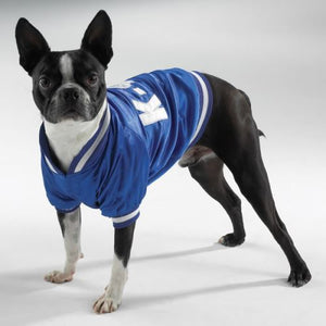 DOG BASEBALL JACKET by Casual Canine - DealsandLiquidations.com