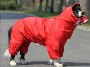 Trending Dealz PET Red / 16 Dog Waterproof Raincoat