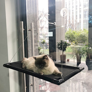 Cat Perch Window