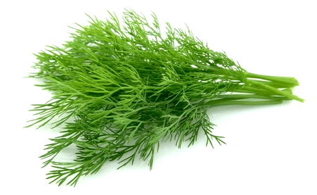 Dill Seeds– Organic - Beyond Bricks