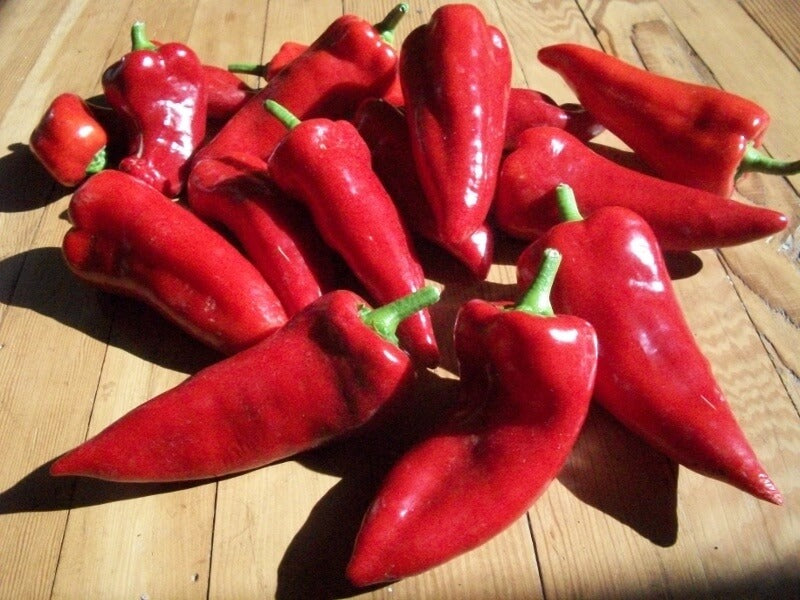 Sweet Peppers Seeds – Organic - Beyond Bricks