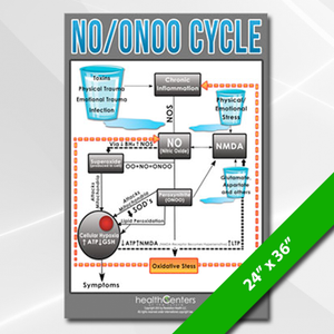 NO/ONOO Cycle Poster Large