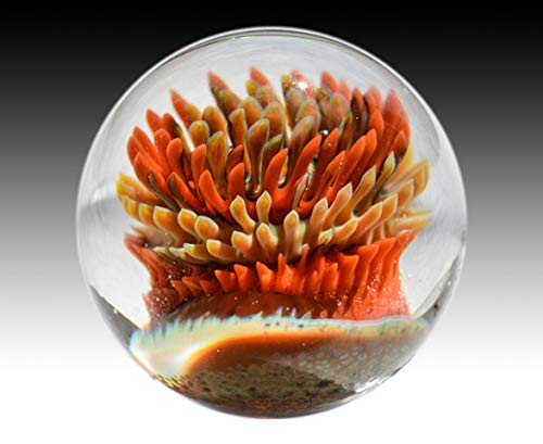 Aaron Slater Anemone Glass Art Marble Orange Nautical Implosion Ocean Orb