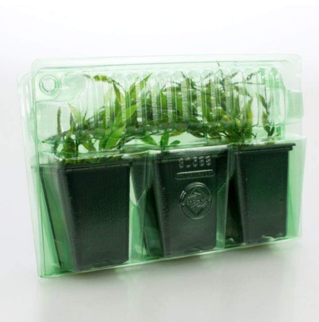 Shipping Container for 3 Live Plants (25 Pack) Large