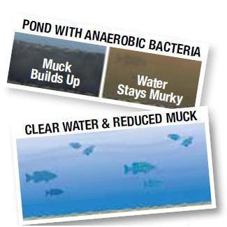 Total Lake Muck Away - PondSupply.CA