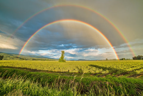 the image shows two rainbows over a green field
