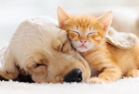the image shows a kitten and a puppy snuggled up together, sleeping.