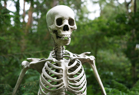 A picture of a skeleton's torso and head. In the background are lots of trees