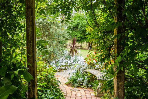 the image shows a magical looking garden