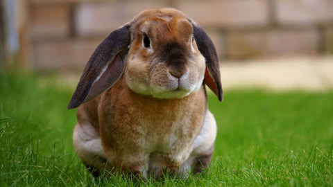 the image shows a rabbit