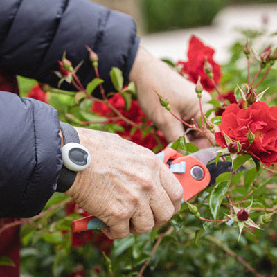 A man cutting some roses. The In-Home Classic Personal Alarm can be seen on the man's wrist