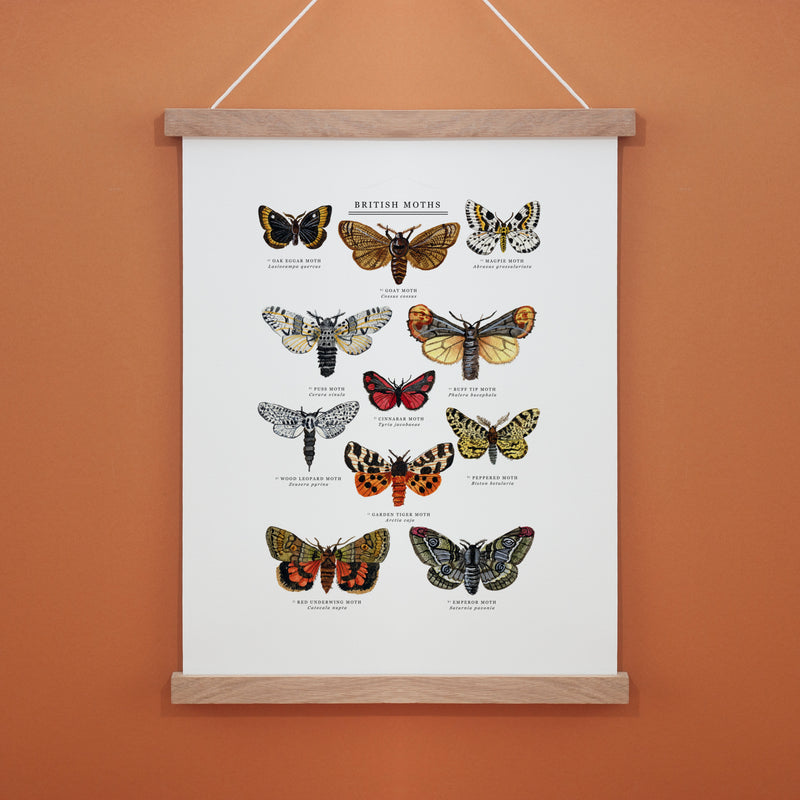 British Moths  Illustrated Giclée Print - 30x40 cm