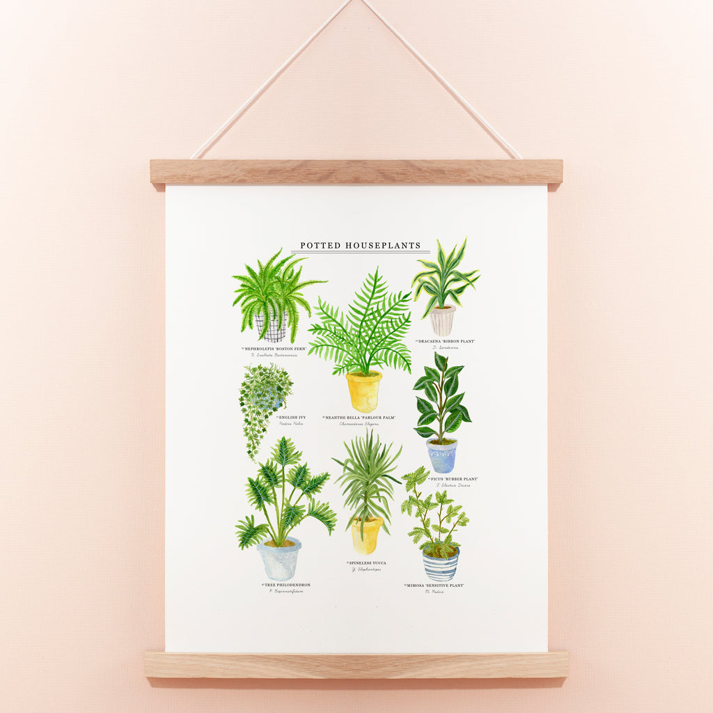 Potted House Plants Giclee Print - 30 x 40 cm