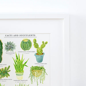 Cacti & Succulents Illustrated Giclée Print - 30x40cm