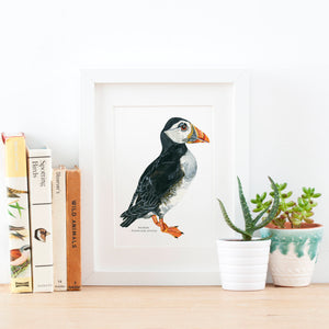 Puffin Illustrated Giclée Print - 18 x 24 cm