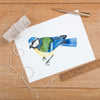 Bluetit Illustrated Giclée Print 18 x 24 cm