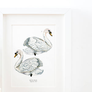 Swan Illustrated Giclée Print - 18 x 24 cm