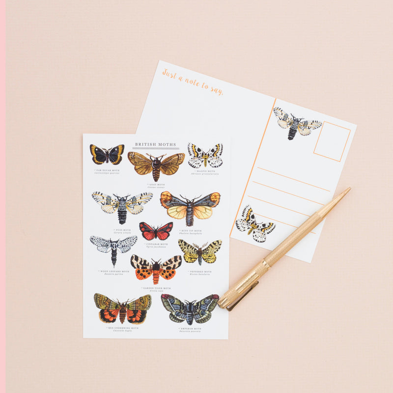 British Moths A6 Postcard