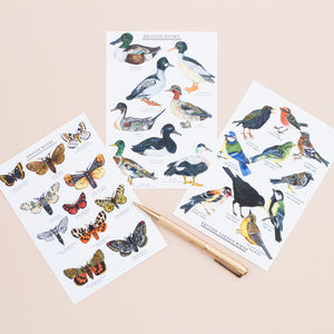 British Nature Postcard Set - Pack of 10