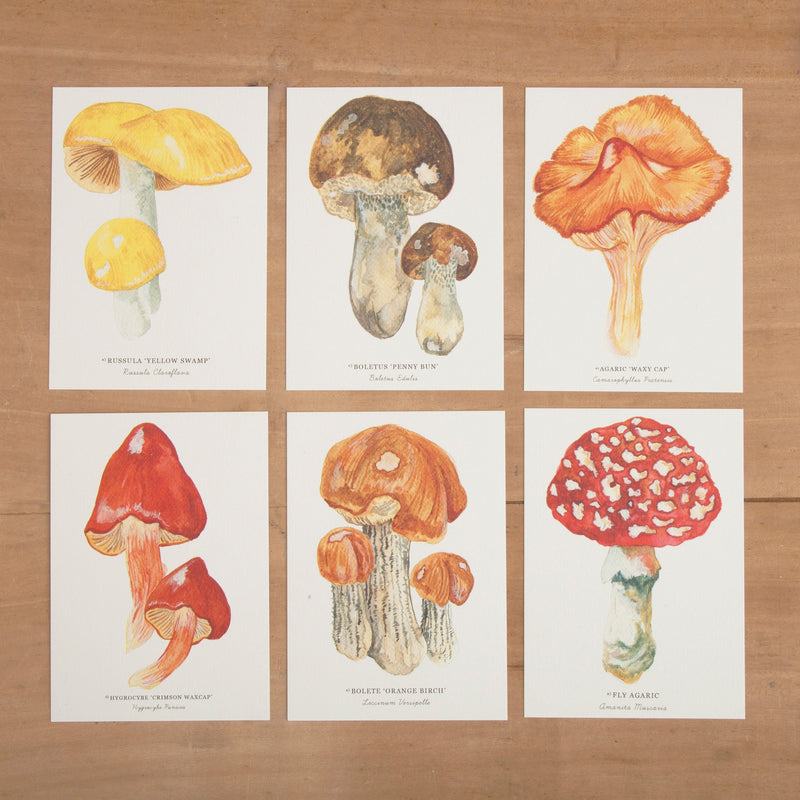Mushrooms & Toadstools Notelets - Pack of 6