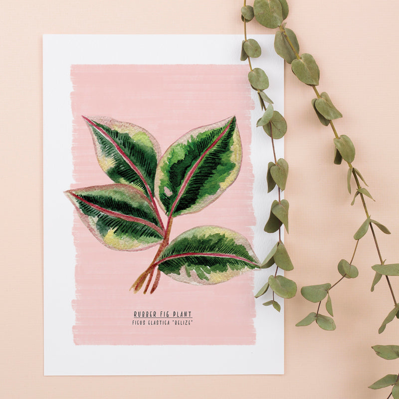 Rubber Fig Plant Illustrated Digital Print - A4