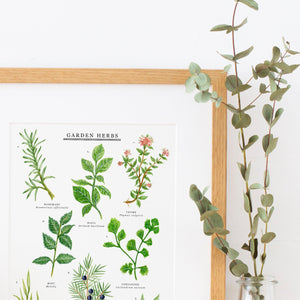 Garden Herbs Illustrated Giclée Print -30x40cm