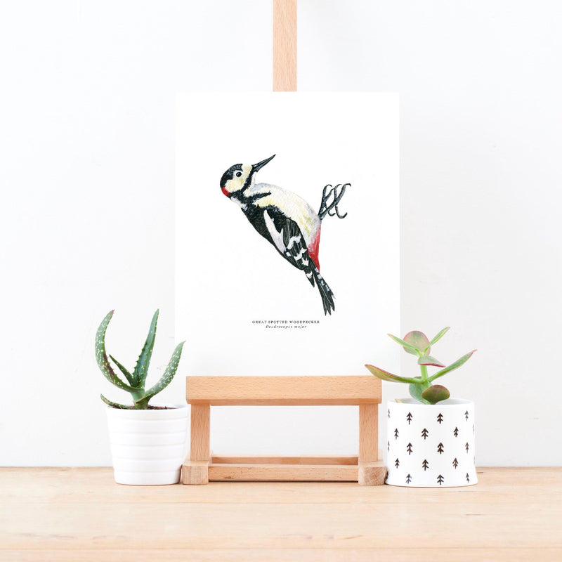 Great Spotted Woodpecker Illustrated Giclée Print - 18 x 24 cm