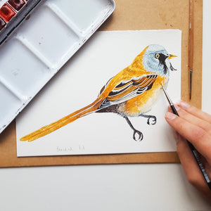 Bearded Tit Illustrated Giclée Print - 18 x 24 cm