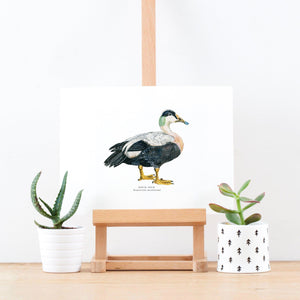 Eider Duck Illustrated Giclée Print - 18 x 24 cm