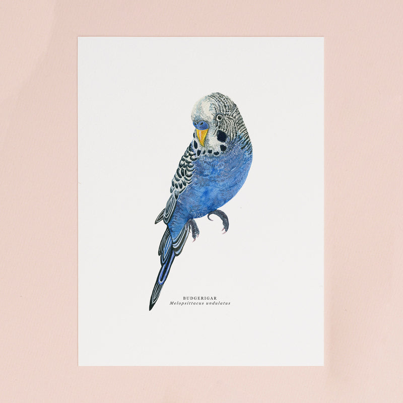 Budgie Illustrated Giclée Print - 18 x 24 cm