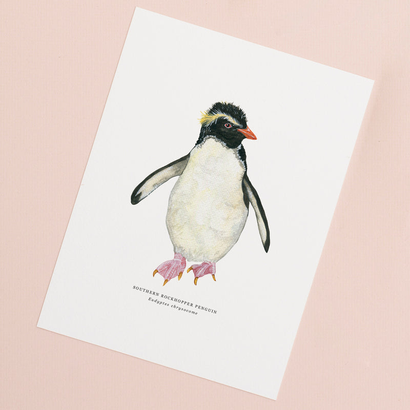 Rockhopper Penguin Illustrated Giclée Print - 18 x 24 cm