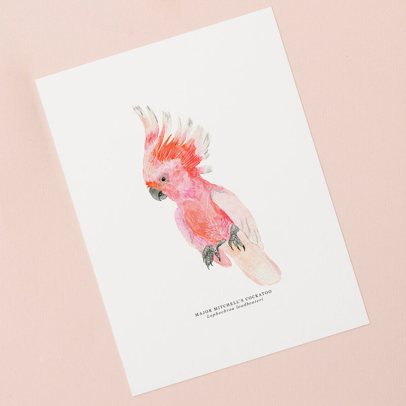 Cockatoo Illustrated Giclée Print - 18 x 24 cm
