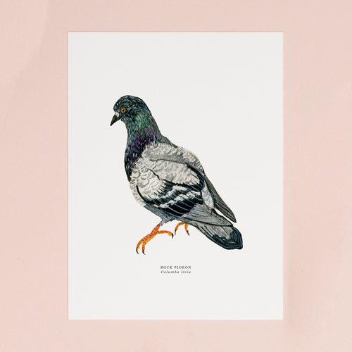 Pigeon Illustrated Giclée Print - 18 x 24 cm