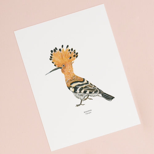 Hoopoe Illustrated Giclée Print - 18 x 24 cm