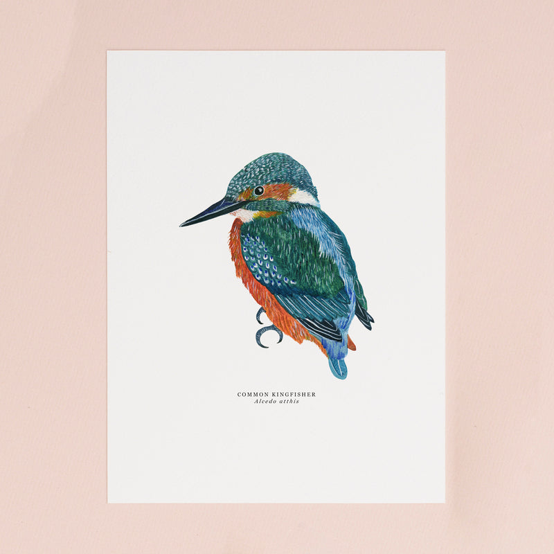 Kingfisher Illustrated Giclée Print - 18 x 24 cm