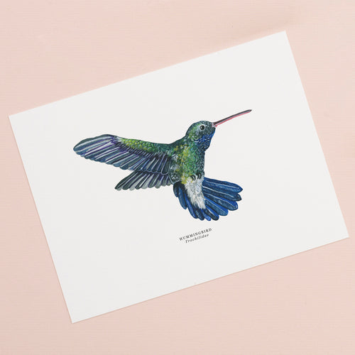 Hummingbird Illustrated Giclée Print - 18 x 24 cm