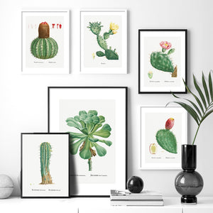 Cactus Sempervivum Flower Plant Wall Art Canvas Painting Nordic Posters And Prints Plants Wall Pictures For Living Room Decor - SallyHomey Life's Beautiful