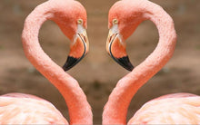 Load image into Gallery viewer, Animals Posters and Prints Wall Art Canvas Painting Beautiful Flamingos Decorative Pictures for Living Room Home Decor No Frame - SallyHomey Life's Beautiful
